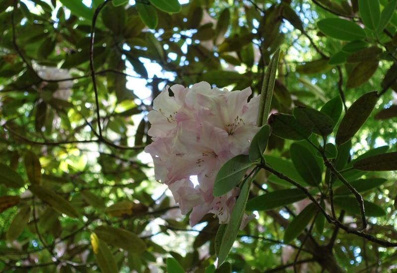 Woodland Tree Blossom, Otahuna Lodge Review