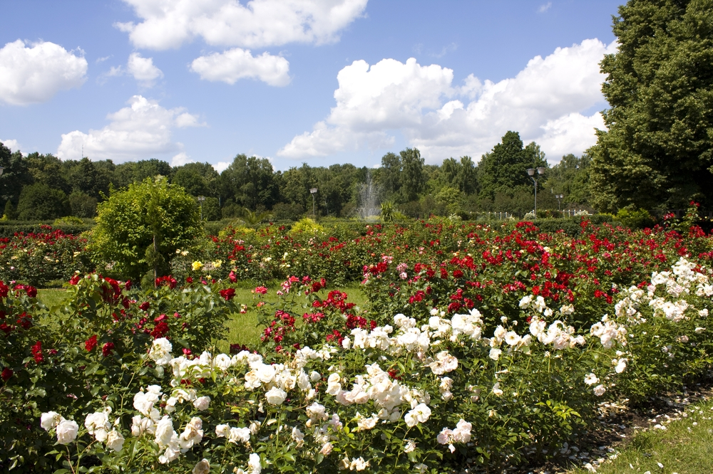 Rose Garden, Sokolniki Park, Moscow, Russia