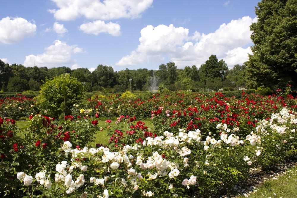Rose Garden, Sokolniki Park, Moscow, Russia