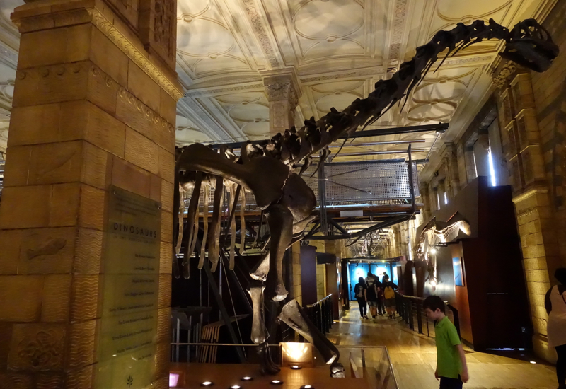 Review Of Natural History Museum London Trave Blog