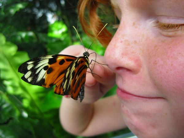 Butterfly Conservatory, Niagara Falls with Kids