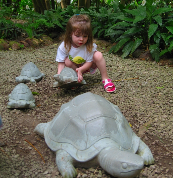 Playing with Turtles, Diamond Falls Botanical Gardens, St. Lucia with Kids