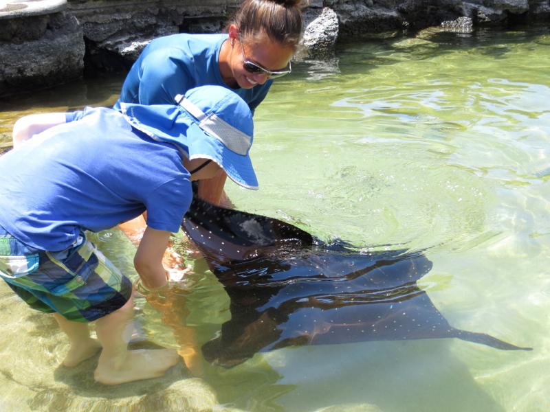 Feeding an Eagle Ray, Four Seasons Hualalai Kids' Club