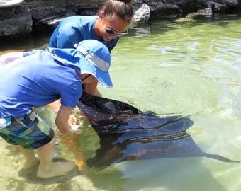 Featured_four_seasons_hualalai_activities-feed_the_eagle_ray_at_kings_pond