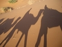 Square_camel%20trekking%20shadows%20in%20the%20desert-morocco