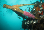 Square_paihia_dive_review-canterbury_wreck_diving