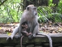 Square_monkey_forest_ubud_bali_review-mother_and_baby_monkey