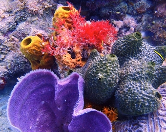 Featured_scuba_certification_in_jamaica_at_couples_resorts-colorful_corals_anemones