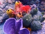 Square_scuba_certification_in_jamaica_at_couples_resorts-colorful_corals_anemones
