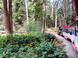 Medium_stanley_park_miniature_train-_vancouver_with_kids-train_and_trees