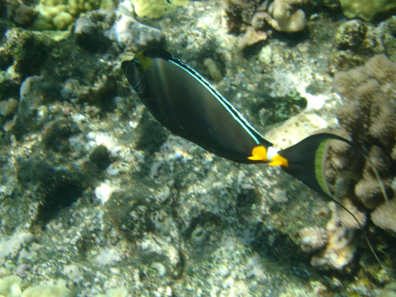 Achilles Tang, Snorkeling Molokini with Maui Snorkel Charters