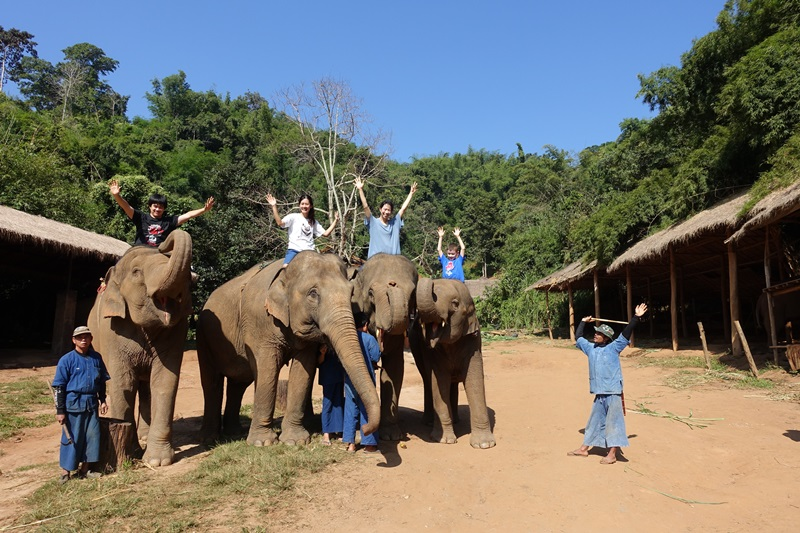 Elephant Mahout Experience, Golden Triangle, Thailand