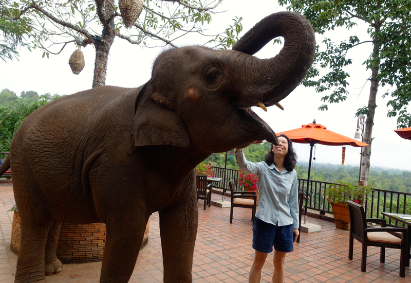 Elephant at Breakfast, Sala Mae Nam, Anantara Golden Triangle