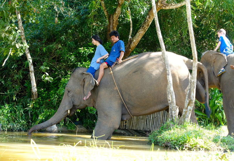 Descending the River Bank for Elephant Bathing, Anantara Mahout Experience