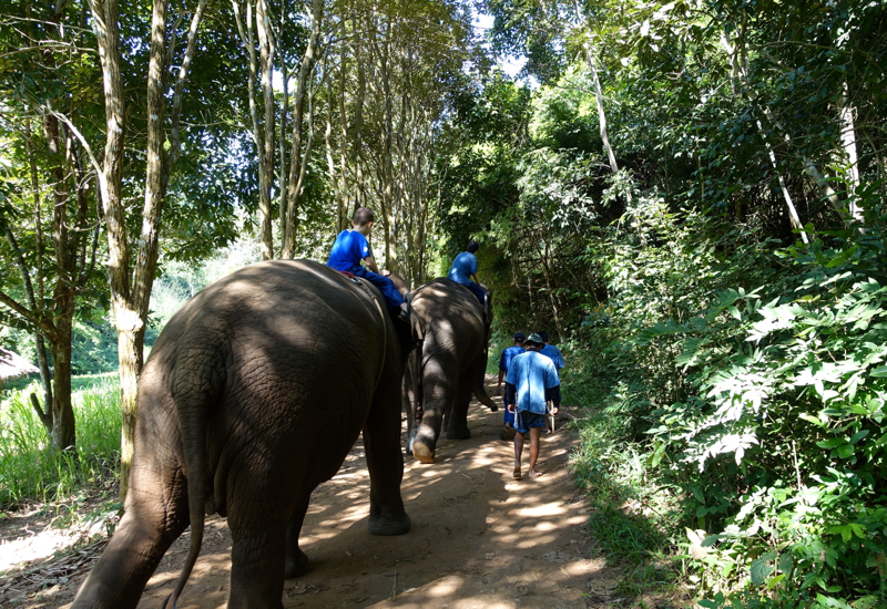 Setting Off on Our Nature Walk, Mahout Experience