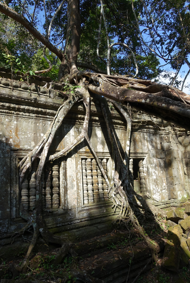 Tree Roots Taking Over Beng Mealea Temple Ruins