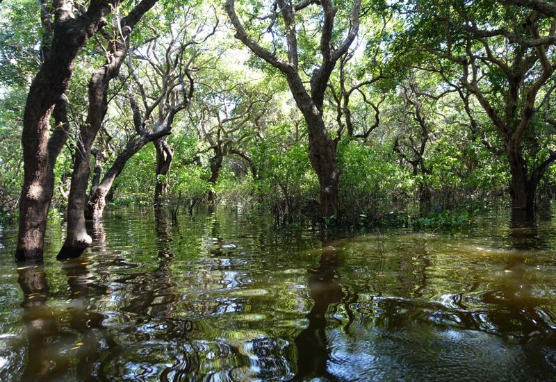 Mangrove Forest, Amansara Tonle Sap Boat Cruise