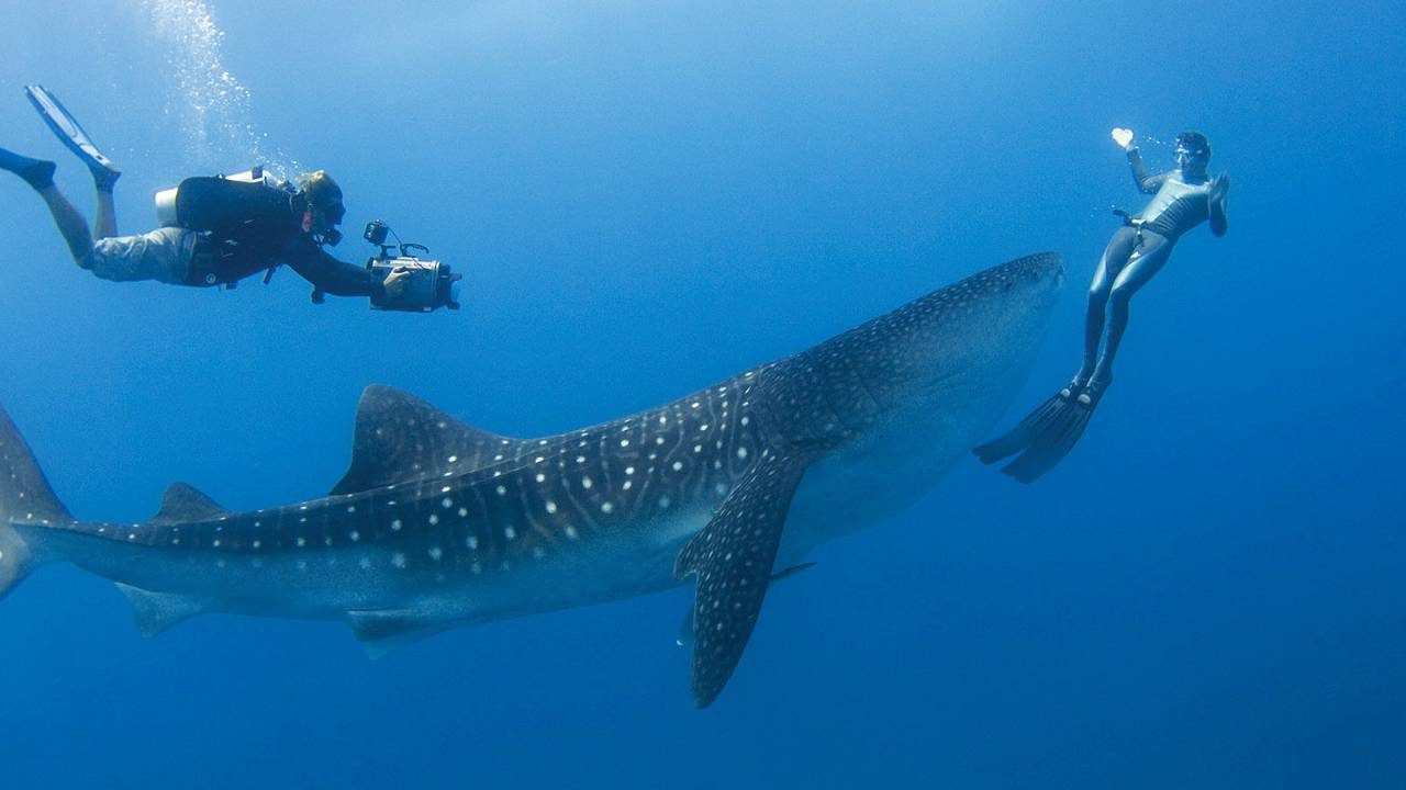Best Places to Swim with Whale Sharks - Maldives