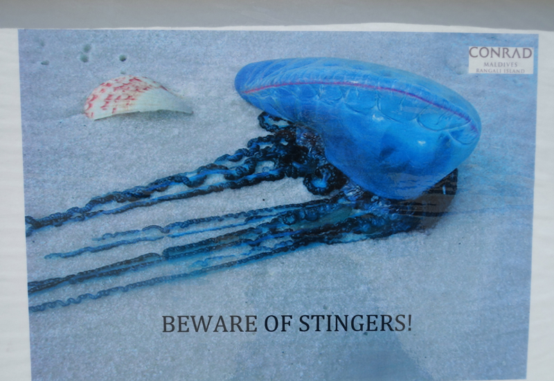 Avoid Getting Stung by Jellyfish at the Conrad Maldives