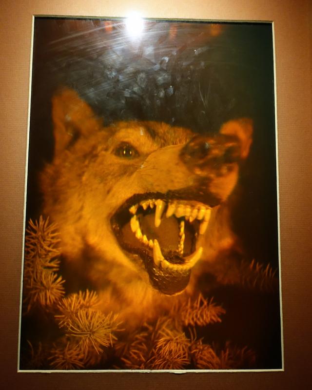 Wolf Hologram, LabyrinthUm Museum St. Petersburg Russia