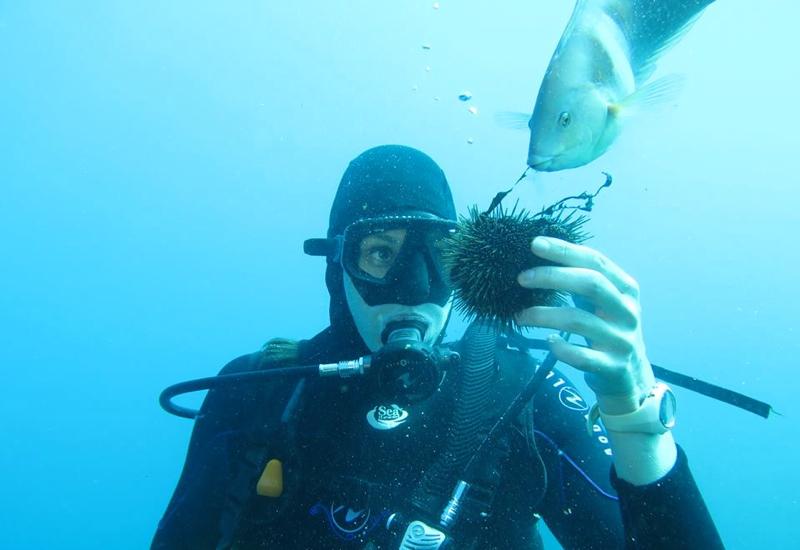 Paihia Dive: Feeding Sea Urchin to Fish, New Zealand