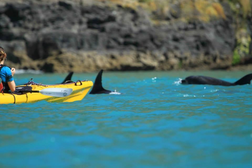 Kayak Alongside Hector's Dolphins in Akaroa