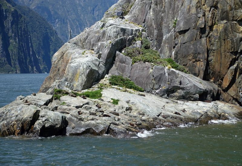 Seals Sunning Themselves, Milford Sound Cruise Review