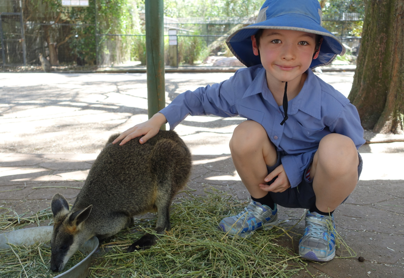 Petting a Wallaby, Featherdale Wildlife Park Review