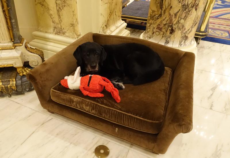 Catie Copley, Canine Ambassador, Fairmont Copley Plaza Review