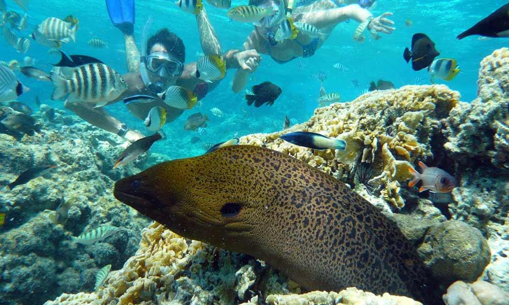 Moray Eel, Bora Bora