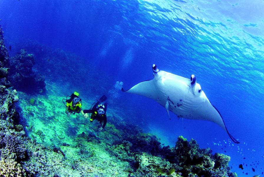 Go Scuba Diving in Bora Bora