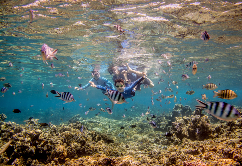 Snorkeling in the Coral Garden, Bora Bora Dream Pictures Review