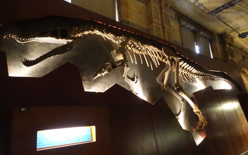 Baryonyx Fossil, London Natural History Museum Review