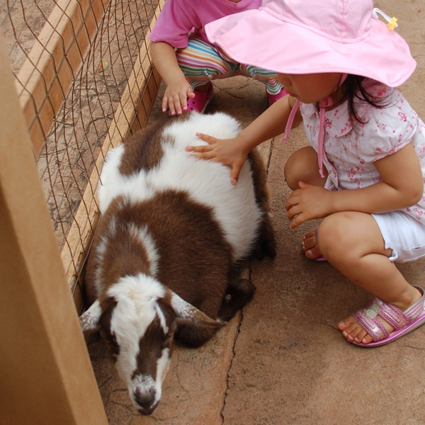 Petting a goat at Honolulu Zoo, Hawaii