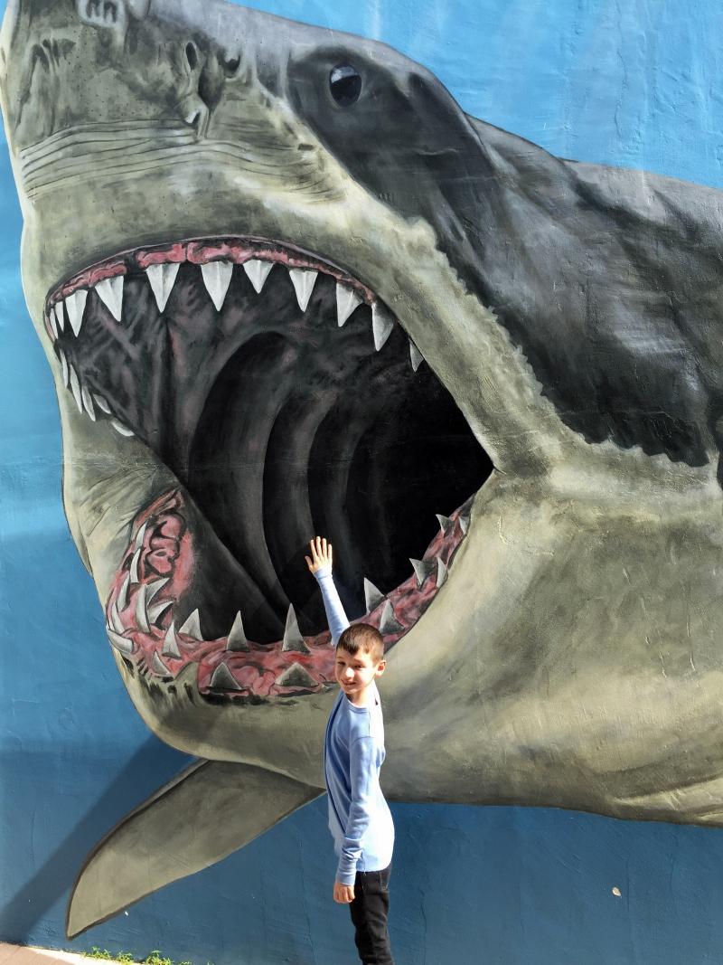 Person vs. Meglodon, Mote Aquarium Sarasota Review