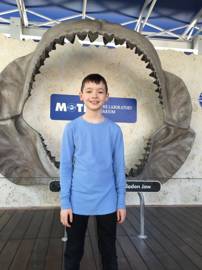 Meglodon Jaw, Mote Aquarium Review