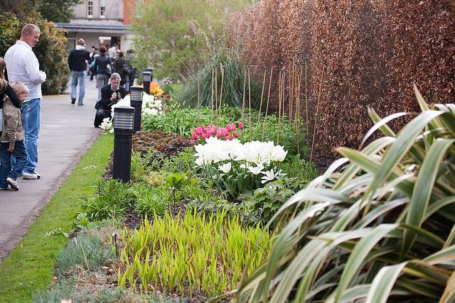 National Botanic Garden, Dublin