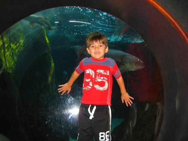 Waikiki Aquarium, Hawaii