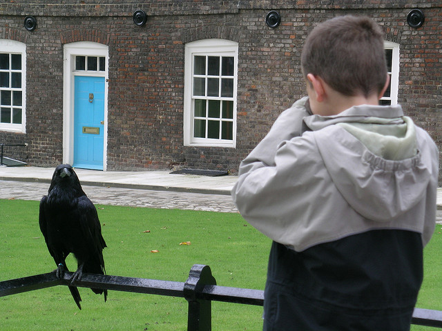 Meeting the raven at the Tower of London