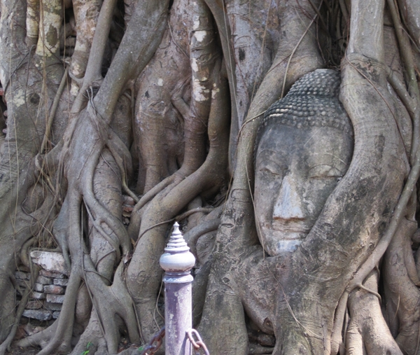 Buddha head entwined in bodhi tree roots, Wat Phra Mahathat, Ayutthaya