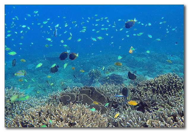 Where to go Snorkeling and Diving in Bali
