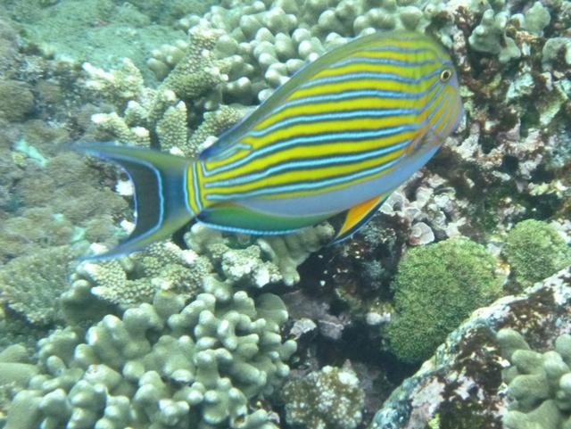 Diving And Snorkeling At Nusa Penida And Nusa Lembongan