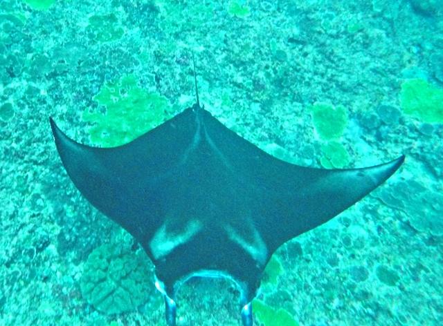 Diving and Snorkeling Nusa Penida - Manta Point