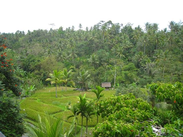 Komaneka at Bisma Ubud Bali Hotel Review - lush grounds
