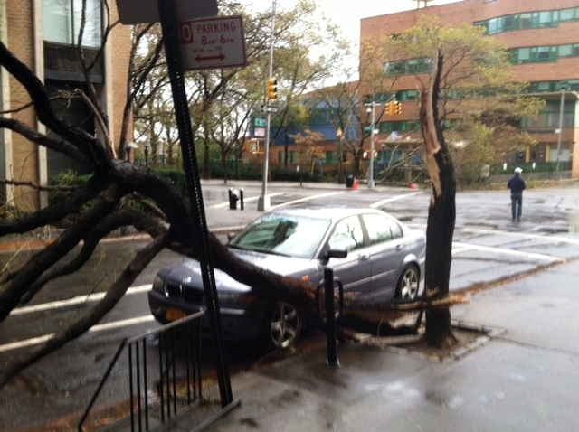 Hurricane Sandy NYC Fallen Tree