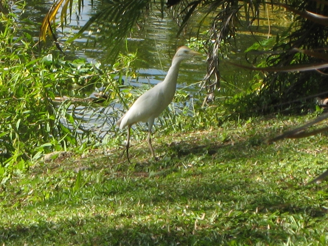 Couples Sans Souci Jamaica All Inclusive - Egret by Lake