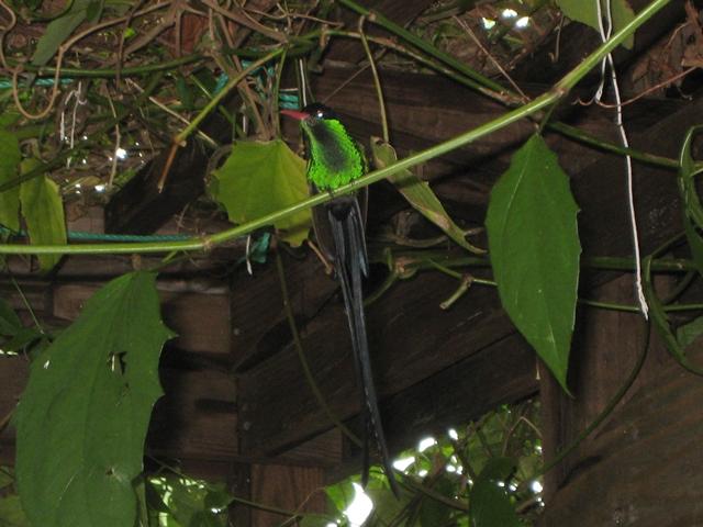 Mystic Mountain Bobsled and Zipline Review - Hummingbird Garden