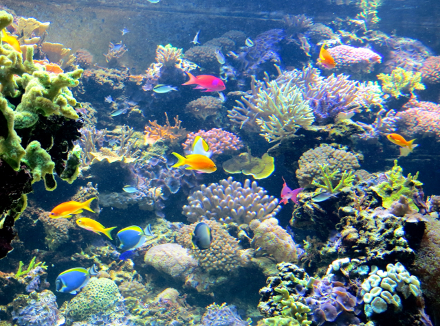 Vancouver Aquarium in Stanley Park with Kids