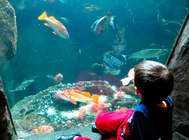 Vancouver Aquarium, Stanley Park with Kids - Gazing at Fish