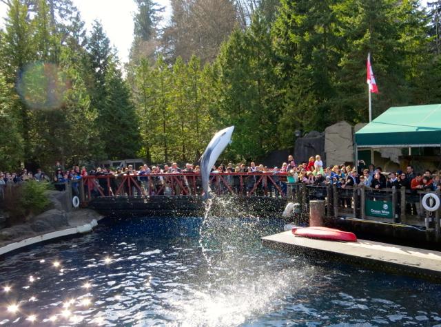 Vancouver Aquarium Dolphin Show